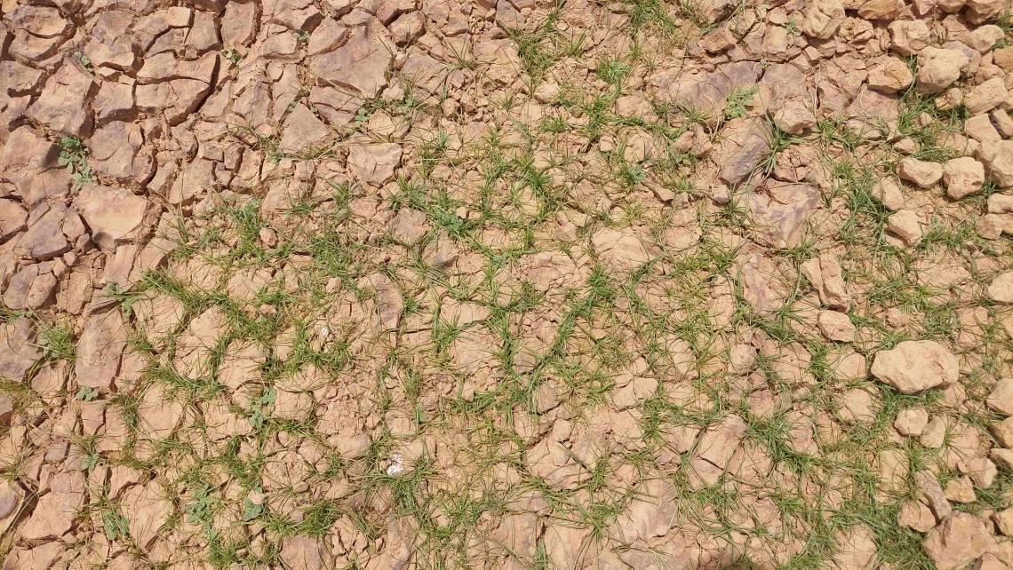L'adaptation au dérèglement climatique vue du Niger par Studio Kalangou, avant la COP 26